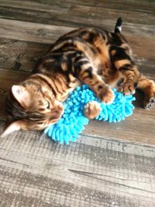 Valeriaan Katten Speeltje - Speelrol - Knuffelkussen Biologisch